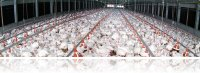 Combating bird flu by developing new diagnostic tools and vaccines