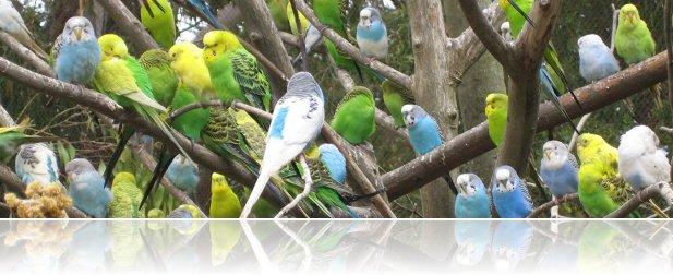 Avian influenza viruses